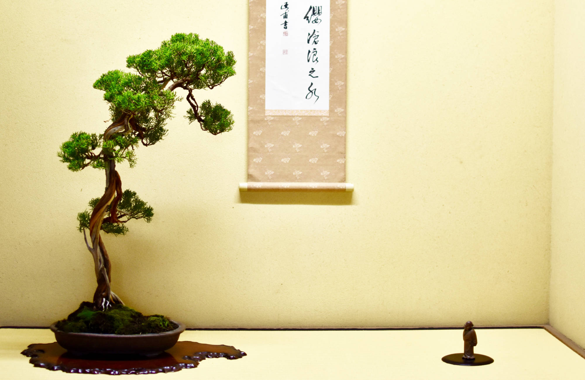 Comment placer un bonsai dans son pot ?