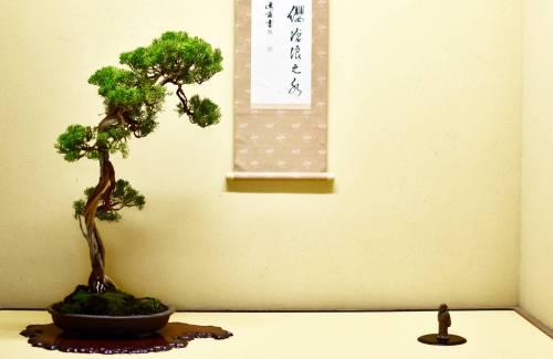 Comment placer un bonsai dans son pot ?