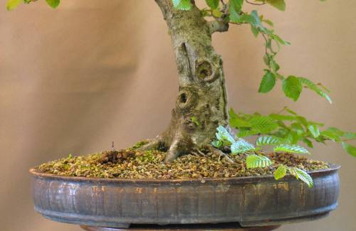 Pot bonsai fait main : pourquoi faire ce choix ?