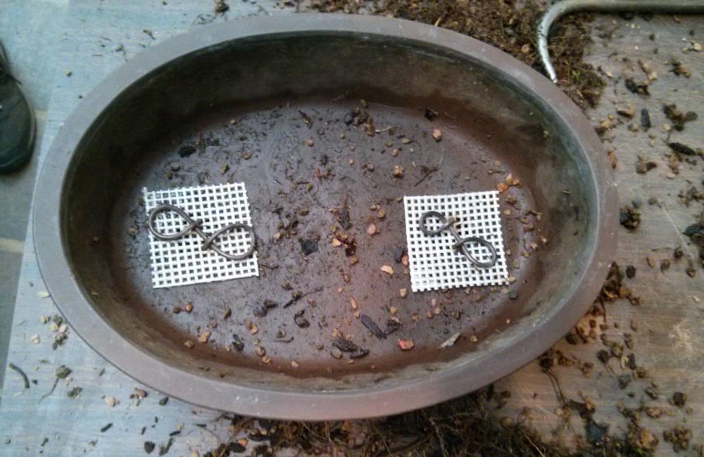 Fixation des grilles de drainage au fond d'un pot à bonsai