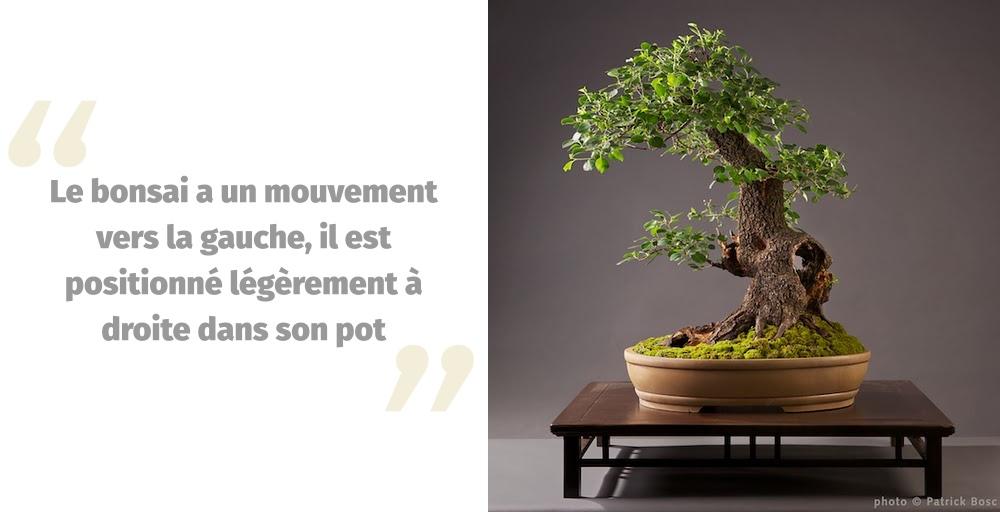 Placer un bonsai dans une poterie ovale